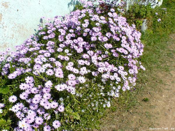 BlumenWer kennt diese Blumen?