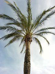 Spanien Flora