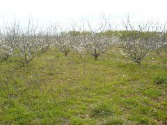 Blüten an BäumenWer kennt die Bäume?