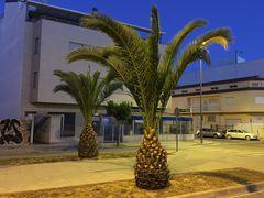 Riesen Ananas
