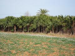 Palmen-Baumschule