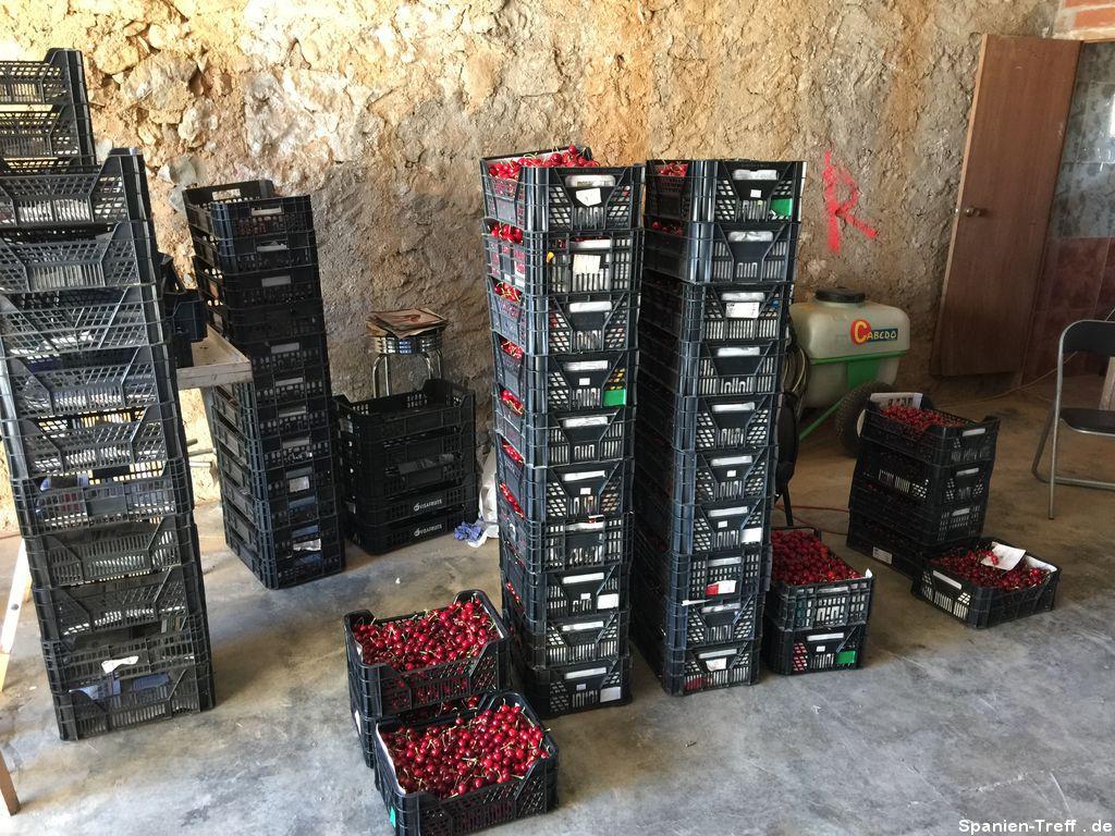 Kisten mit Kirschen