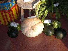 Ein großer Kürbis mit Melonen