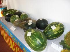 Tisch mit Melonen