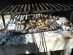 Sich unter Feuer öffnende Miesmuscheln/Mejillones