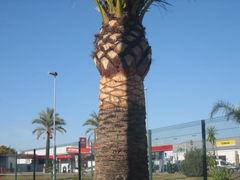 Semana Santa in Jerez