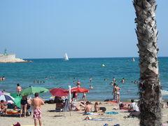 Strand von Benicarló mit Palme