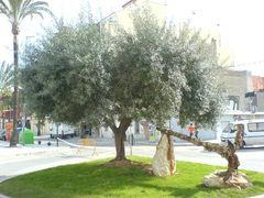 Baum und Anker