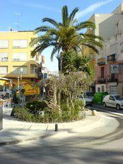 Palmen und Grün an der Straße