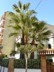 Palme im Hausgarten