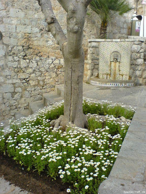Baum und Brunnen bei Peñíscola