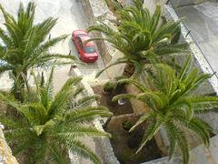 Palmen von oben bei Peñíscola