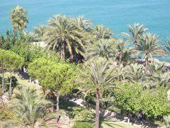 Blick auf die Palmen in Garten vom Antipapst Papa Luna in Peñíscola.