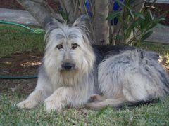 Mein Hund (Mischling) im Garten.