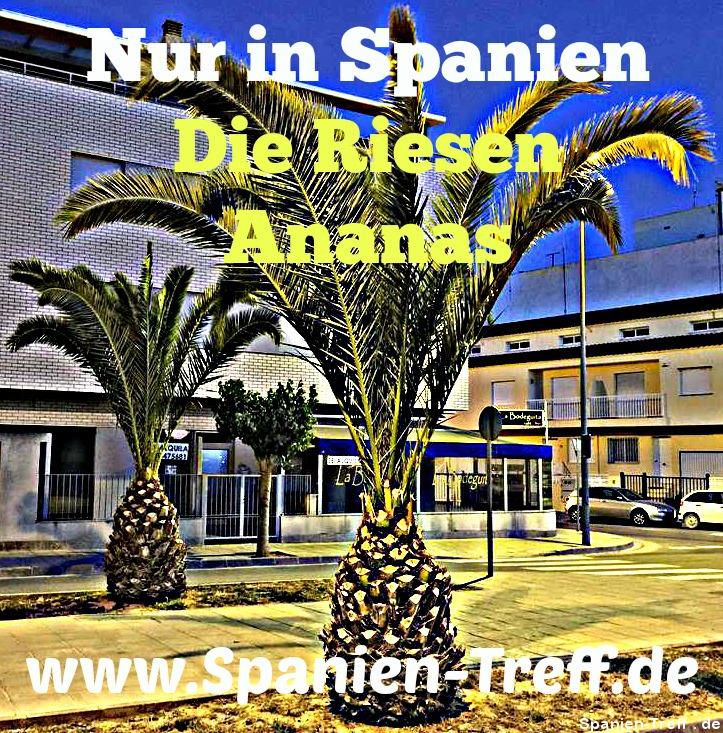 Riesen-Ananas in Spanien bei Spanien-Treff.de