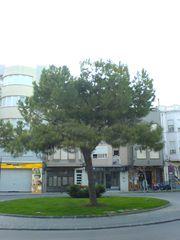 Baum im Kreisel