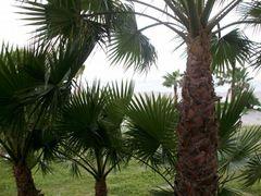 MD001029 -nach dem vielen Regen ist der Playa de San Juan in Almunecar ergrünt