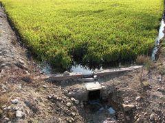 Wasserabfluss am Reisfeld