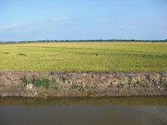 Ebrodelta