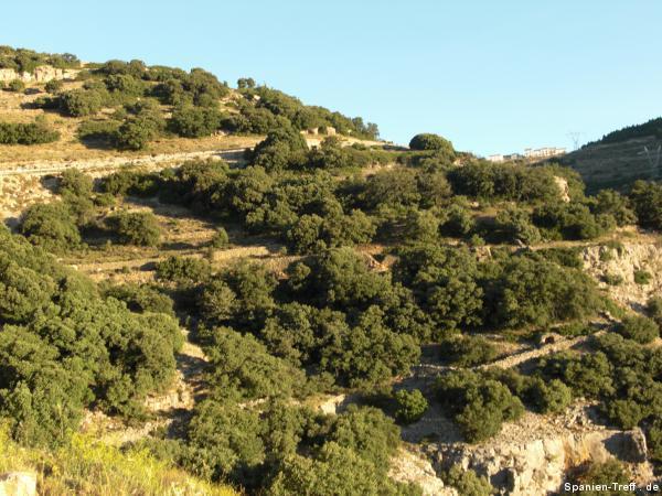 Terrassen im Gebirge
