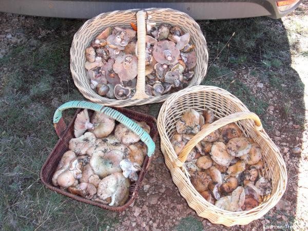 Körbe voller Pilze - Edelreizker
