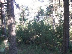 Dickicht im Wald.