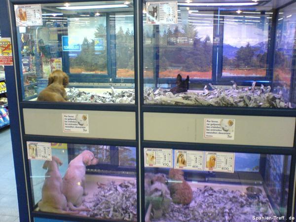 hunde welpen in der supermarkt zoohandlung spanien spanien spanisch forum spanien treff. Black Bedroom Furniture Sets. Home Design Ideas