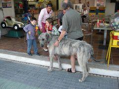 Riesen Hund