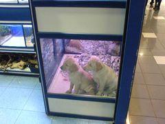 Hunde Welpen in der Supermarkt Zoohandlung