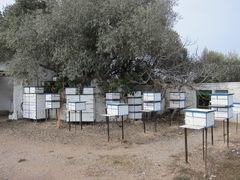 Taubenzuchtverein in Spanien