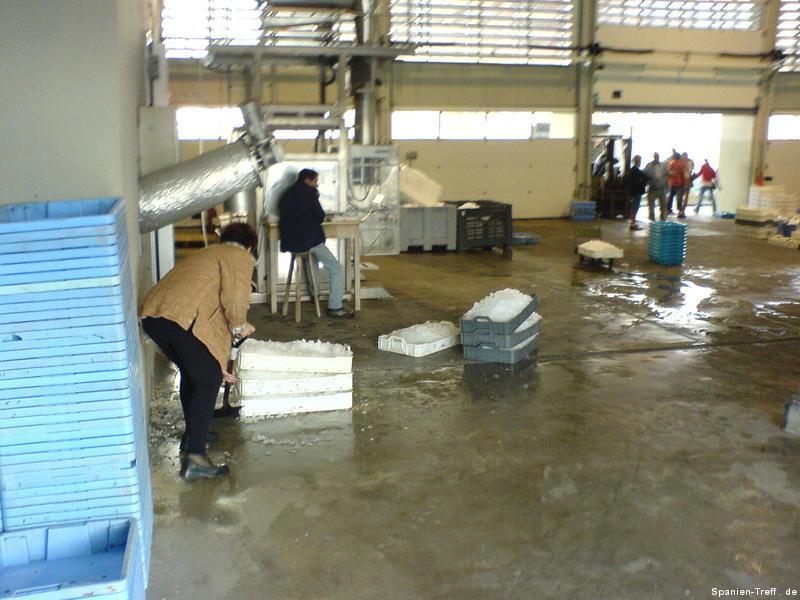 Fischmarkt und Eismaschine