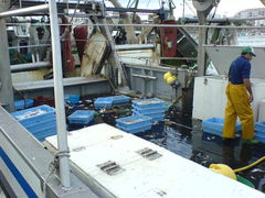 Fischerboot mit Fischfang