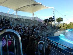 Zuschauer-Tribüne im Delfinarium