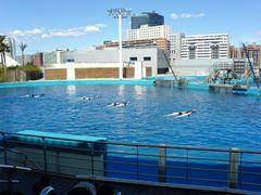 Delfinarium & Delfine schieben Tier-Dompteure