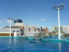 Delfinarium & Delfine beim Sprungkunststück