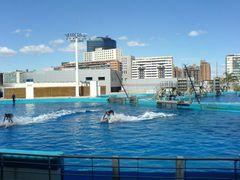 Delfinarium & Delfine als Surfbrett