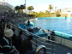 Delfinarium & Delfine mit Kindern
