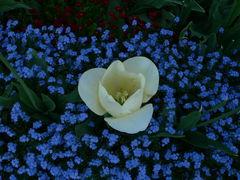 die schönsten Blumen
