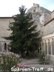 Baum im Rosengarten von Morella