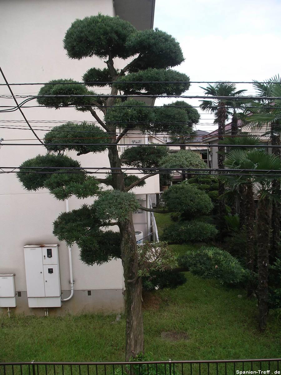 Tokyo, Garten
