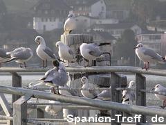 Vögel am Vierwaldstättersee